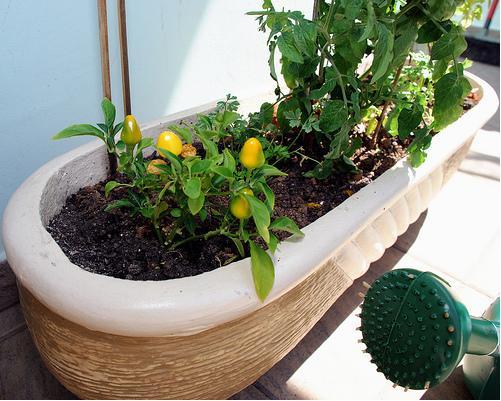 Como montar uma horta em casa   Fotos e modelos