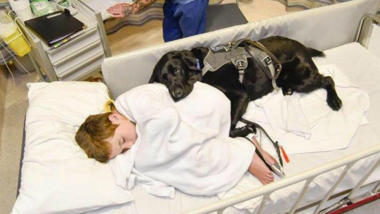 Corrente do Amor: labrador de menino autista fica perto de seu dono até no hospital